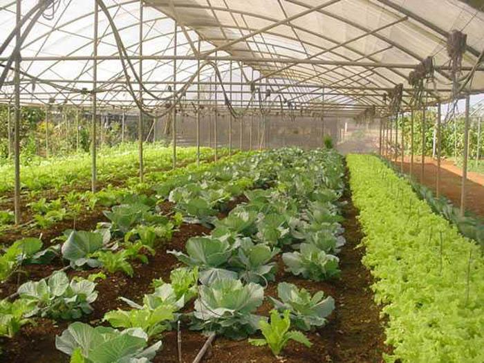 Produktion von Gemüse