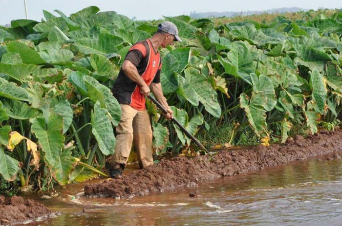 Landwirtschaft in Kuba