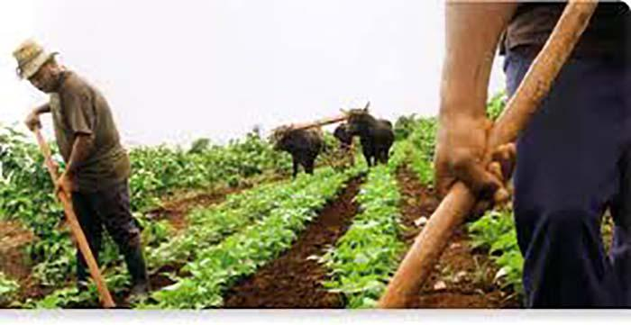 Ode an die NationalhymneBlockade der USA verursachte Millionenschäden in Landwirtschaft