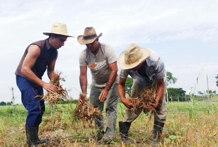 Vom Soldaten zum Bauern