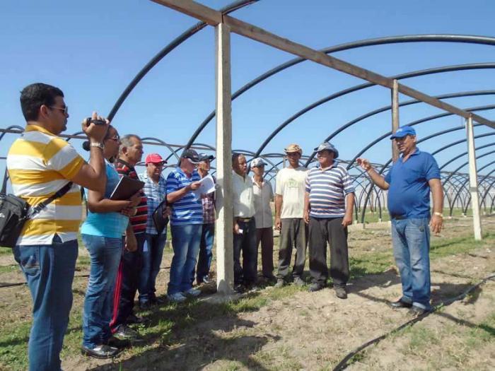 Tunnel für Tabakanbau nach kubanischem Design