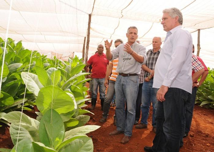 Díaz Canel besucht Betriebe in Artemisa