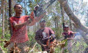 Nach dem Durchzug des zerstörerischen Hurrikans