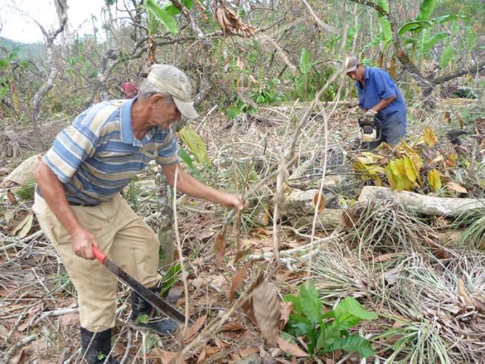 Der Kakao nach den Hurrikanen