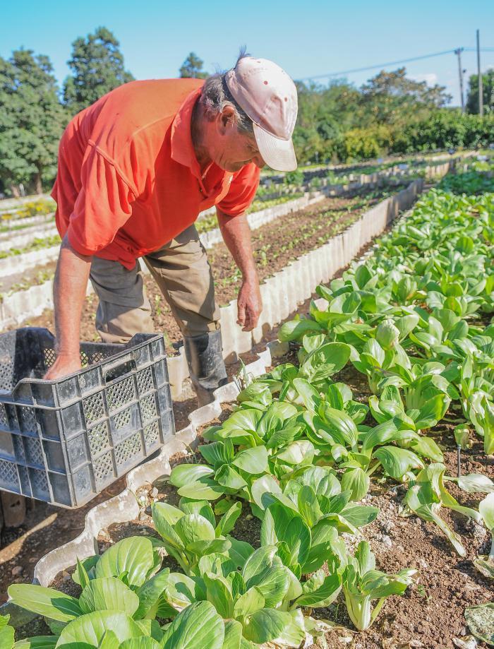 städtische Landwirtschaft