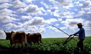 Kubanische Landwirtschaft