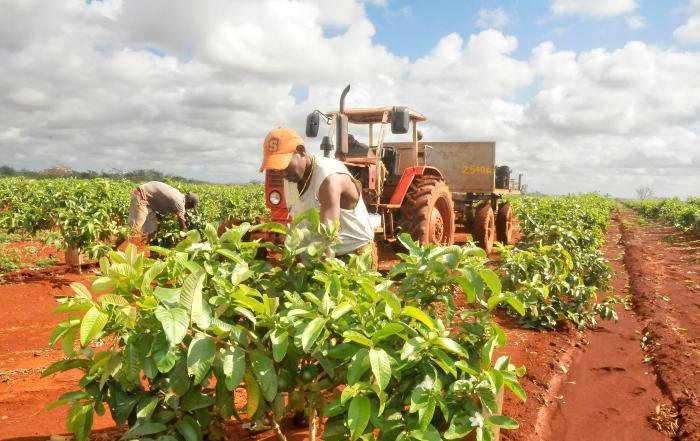 in der Landwirtschaft Arbeitende