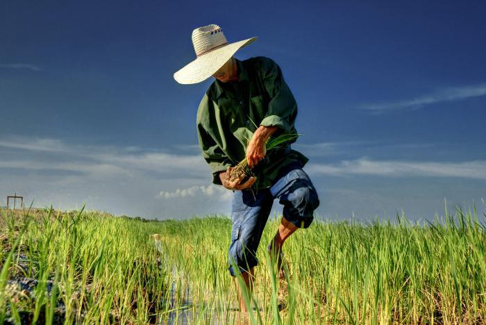Landwirtschaftliche Produktion