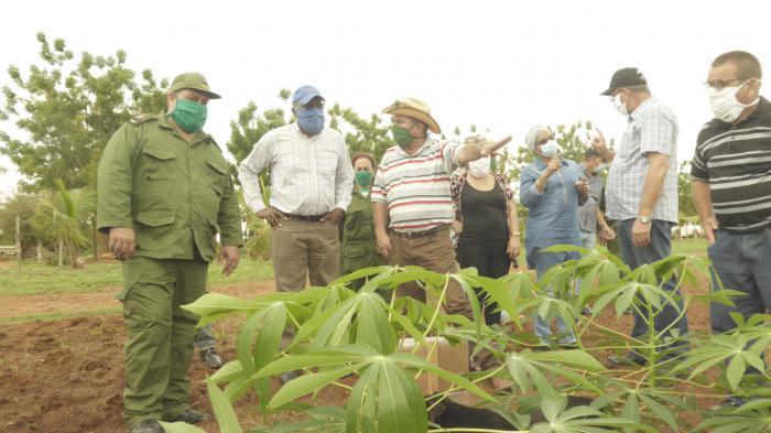 Landwirtschaft in Cienfuegos