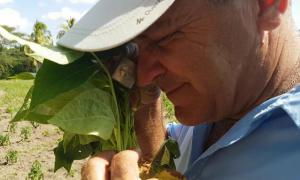 Schutz der Landwirtschaft