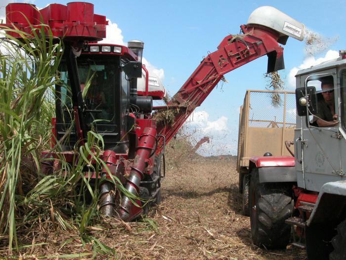 Schnitt und Anlieferung des Zuckerrohrs