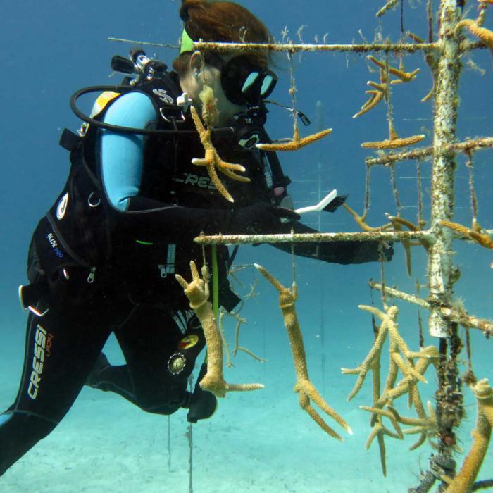 Pflanzschule für Korallenriffe