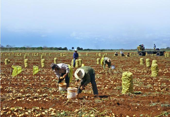 Landwirtschaft in Mayabeque