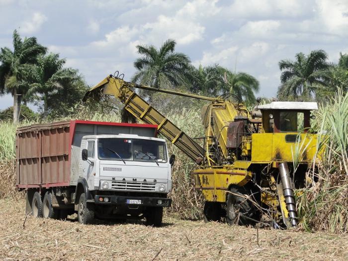 Zuckerrohrernte