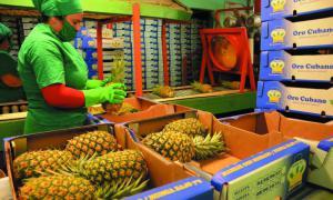 Ananasexport